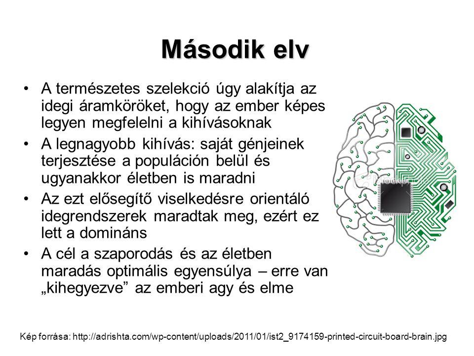 Kép forrása: http://www.matud.iif.hu/2010/11/Pics/Eder6.jpg A génkészlet csak egy a sok meghatározó tényező közül