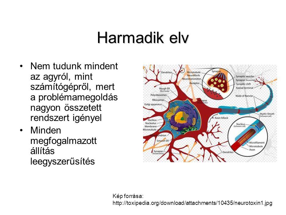 Az evolúciós pszichológia célterülete •Az érdekes az, hogy például a kisbaba milyen agyi mechanizmus miatt képes megtanulni beszélni, míg az elefánt nem.