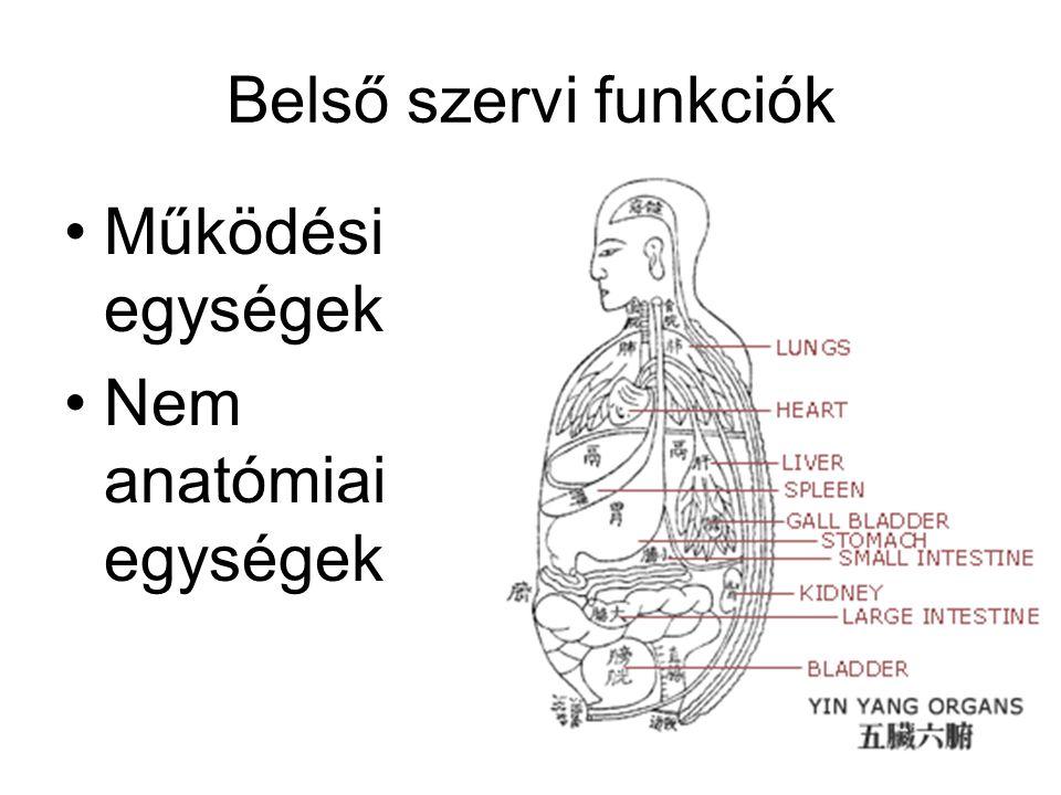 Belső szervi funkciók •Működési egységek •Nem anatómiai egységek