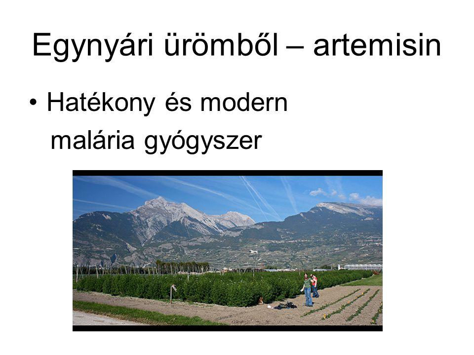 Egynyári ürömből – artemisin •Hatékony és modern malária gyógyszer