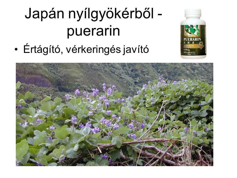 Japán nyílgyökérből - puerarin •Értágító, vérkeringés javító
