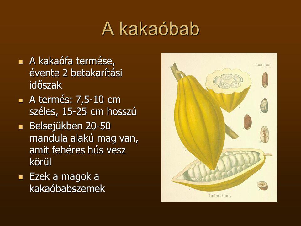A kakaóbab  A kakaófa termése, évente 2 betakarítási időszak  A termés: 7,5-10 cm széles, 15-25 cm hosszú  Belsejükben 20-50 mandula alakú mag van,