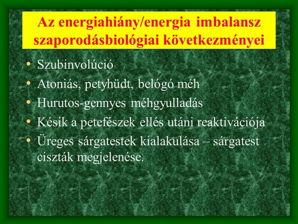 Az energiahiány/energia imbalansz szaporodásbiológiai következményei • Szubinvolúció • Atoniás, petyhüdt, belógó méh • Hurutos-gennyes méhgyulladás •