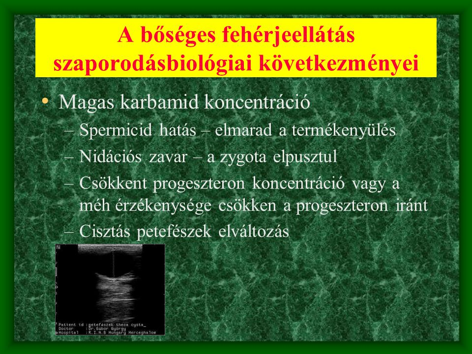 A bőséges fehérjeellátás szaporodásbiológiai következményei • Magas karbamid koncentráció –Spermicid hatás – elmarad a termékenyülés –Nidációs zavar –