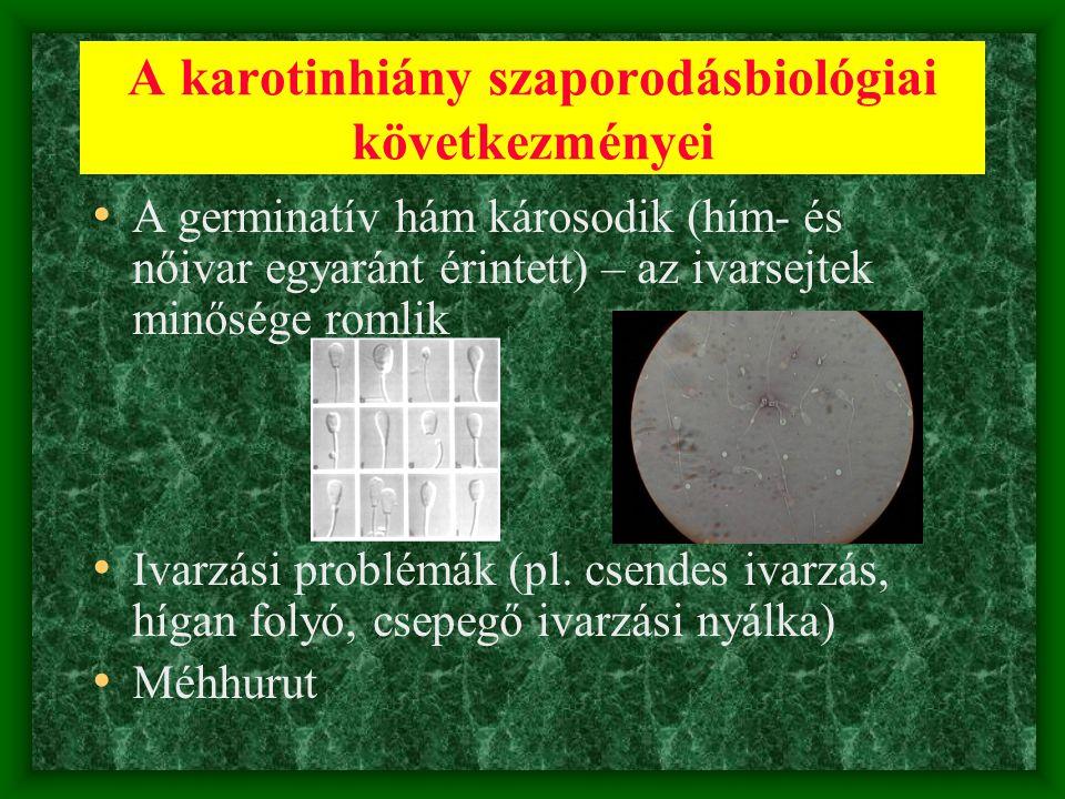 A karotinhiány szaporodásbiológiai következményei • A germinatív hám károsodik (hím- és nőivar egyaránt érintett) – az ivarsejtek minősége romlik • Iv