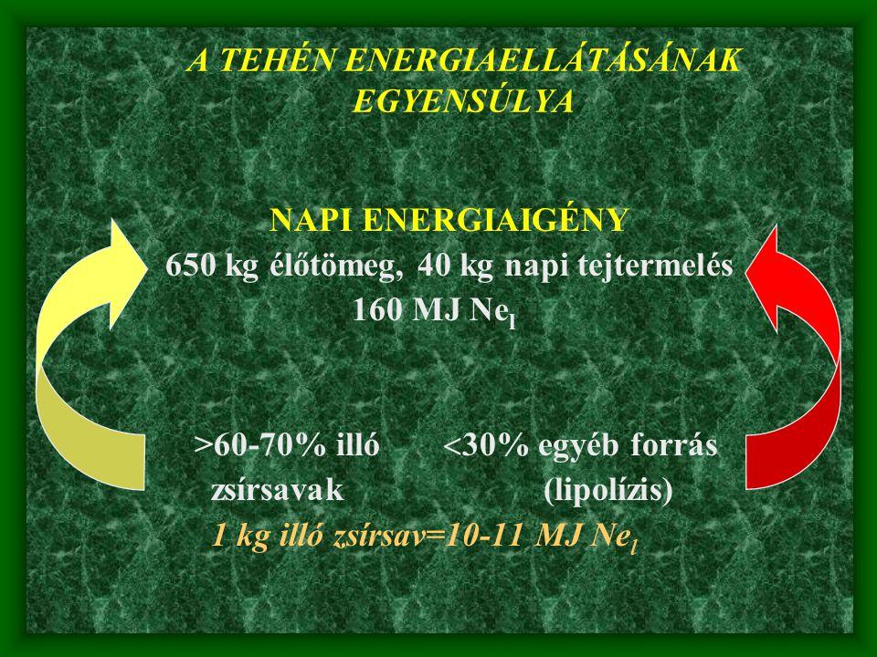 A TEHÉN ENERGIAELLÁTÁSÁNAK EGYENSÚLYA NAPI ENERGIAIGÉNY 650 kg élőtömeg, 40 kg napi tejtermelés 160 MJ Ne l >60-70% illó  30% egyéb forrás zsírsavak