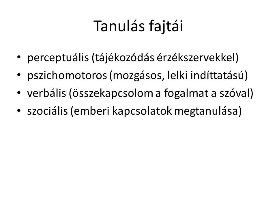 Tanulás fajtái • perceptuális (tájékozódás érzékszervekkel) • pszichomotoros (mozgásos, lelki indíttatású) • verbális (összekapcsolom a fogalmat a szó