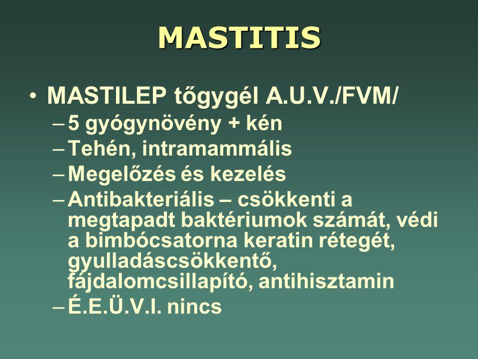 MASTITIS •MASTILEP tőgygél A.U.V./FVM/ –5 gyógynövény + kén –Tehén, intramammális –Megelőzés és kezelés –Antibakteriális – csökkenti a megtapadt bakté