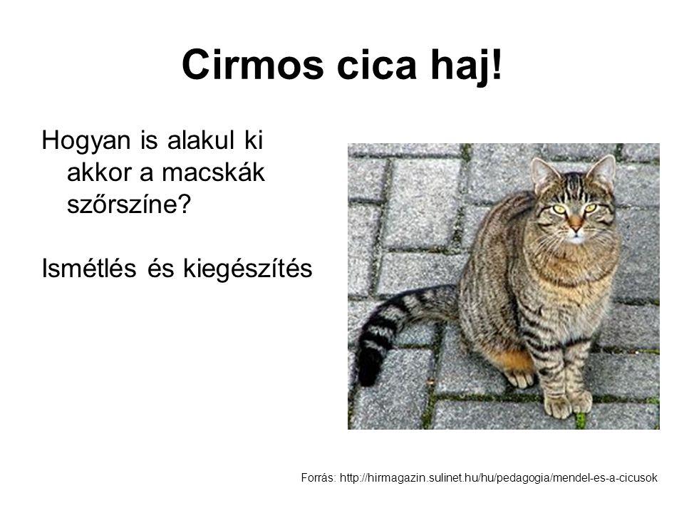 Cirmos cica haj! Hogyan is alakul ki akkor a macskák szőrszíne? Ismétlés és kiegészítés Forrás: http://hirmagazin.sulinet.hu/hu/pedagogia/mendel-es-a-