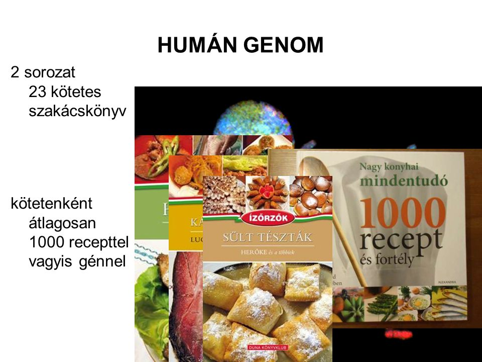 GENOTIPUS: ALLÉLOK vagy GÉNEK •allélok: a homológ kromoszómapárok azonos helyén található egyetlen gén változatai (homozigóta vagy heterozigóta) •gének, de nem allélok: a kromoszómák eltérő helyein található különböző feladatú fehérjéket kódoló szakaszok (receptek) diós tészta – mákos tészta diós tészta – bajai halászlé