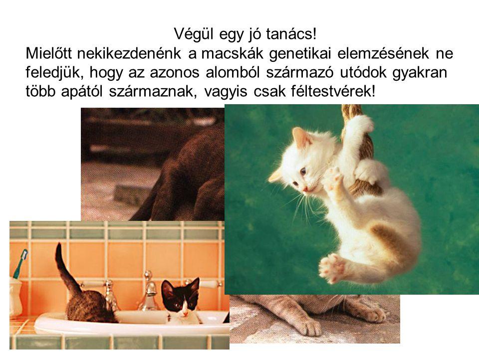 Végül egy jó tanács! Mielőtt nekikezdenénk a macskák genetikai elemzésének ne feledjük, hogy az azonos alomból származó utódok gyakran több apától szá