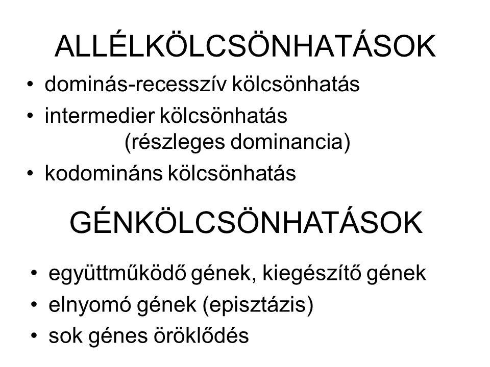 FENOTIPUS