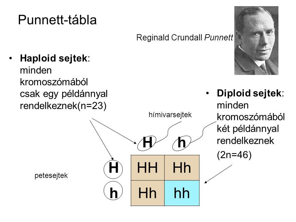 Punnett-tábla Reginald Crundall Punnett •Haploid sejtek: minden kromoszómából csak egy példánnyal rendelkeznek(n=23) Hh HHHHh h hh petesejtek hímivars
