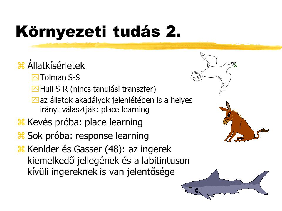 Környezeti tudás 2. zÁllatkísérletek yTolman S-S yHull S-R (nincs tanulási transzfer) yaz állatok akadályok jelenlétében is a helyes irányt választják