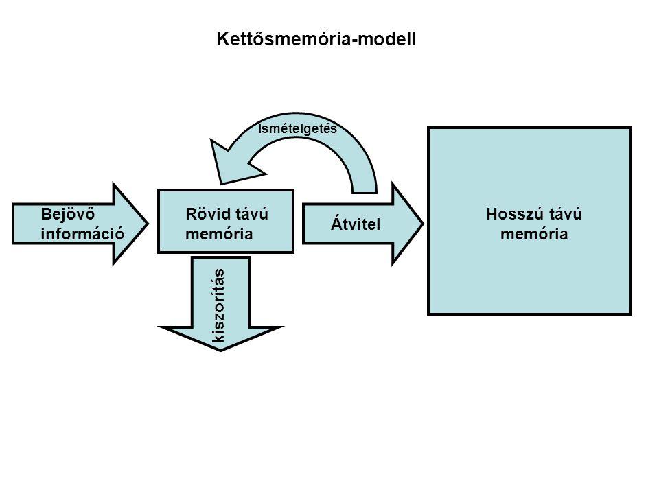 Bejövő információ Ismételgetés Rövid távú memória Átvitel Hosszú távú memória kiszorítás Kettősmemória-modell