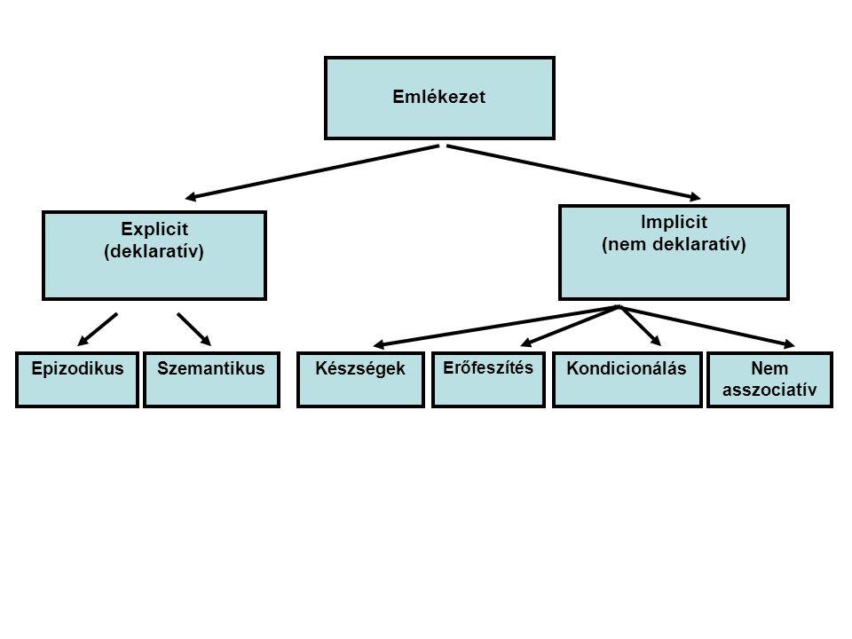 Emlékezet Explicit (deklaratív) Implicit (nem deklaratív) EpizodikusSzemantikusKészségek Erőfeszítés KondicionálásNem asszociatív Emlékezet Implicit (