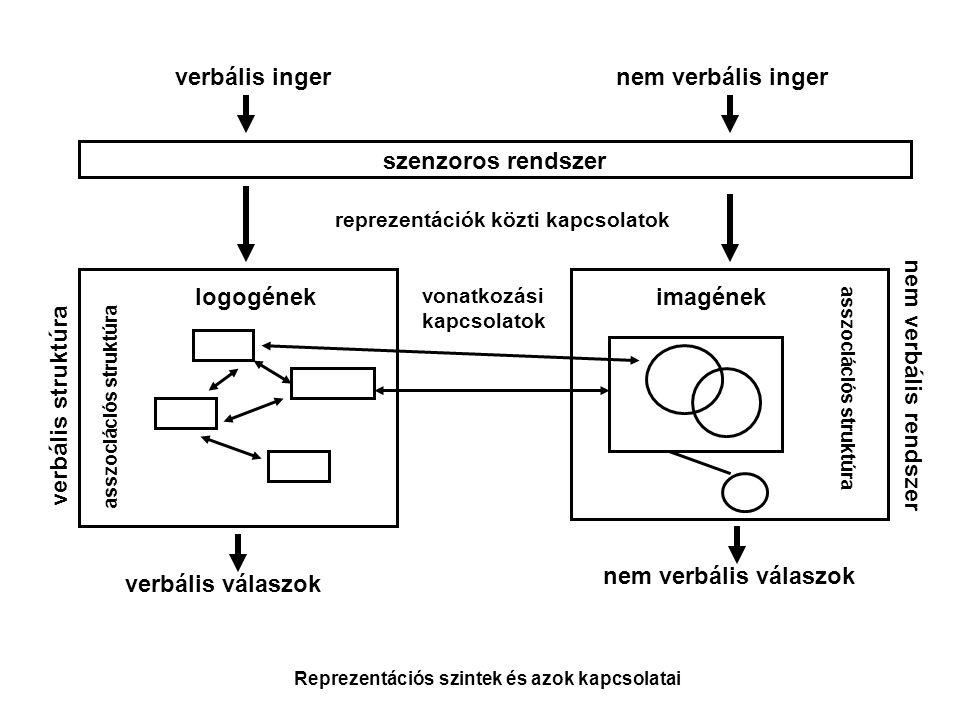 verbális ingernem verbális inger szenzoros rendszer reprezentációk közti kapcsolatok verbális válaszok nem verbális válaszok verbális struktúra nem ve