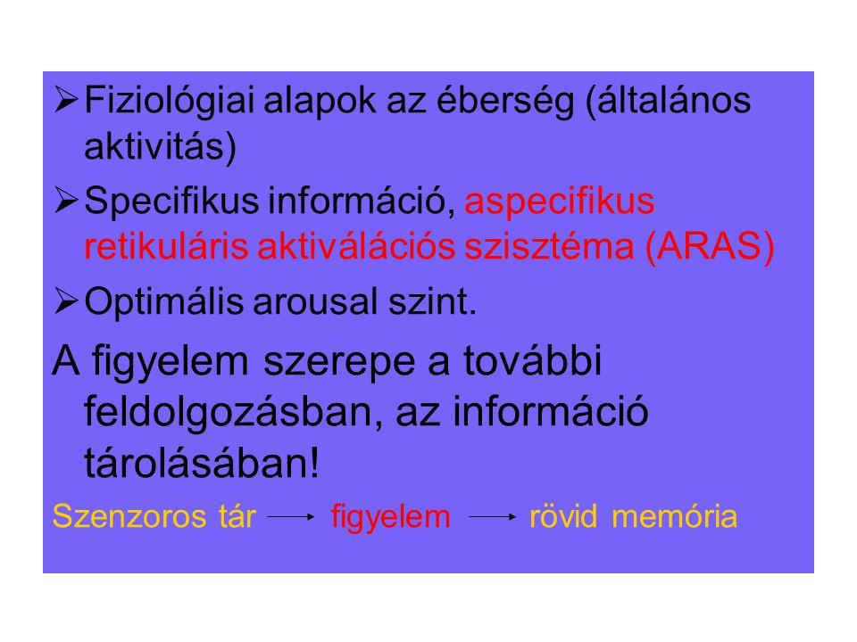  Fiziológiai alapok az éberség (általános aktivitás)  Specifikus információ, aspecifikus retikuláris aktiválációs szisztéma (ARAS)  Optimális arous