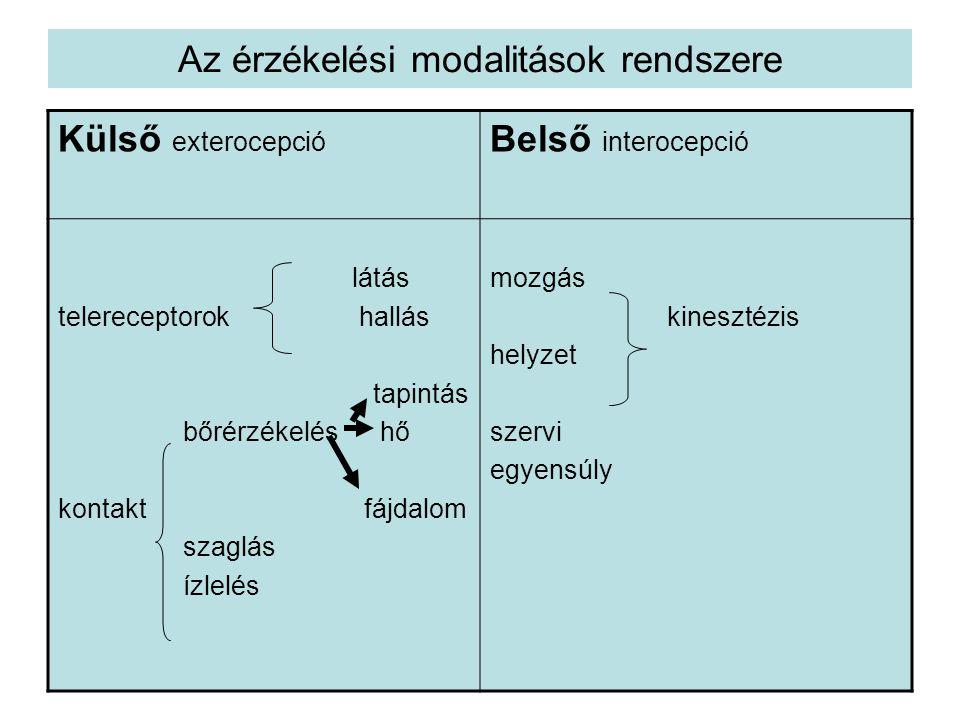 •Howard Gardner (1983) többtényezős moduláris elméletében a hat intelligencia a következő; •nyelvi •logikai-matematikai •téri •zenei •testi-kinesztéziás •személyes (intra- és interperszonális)