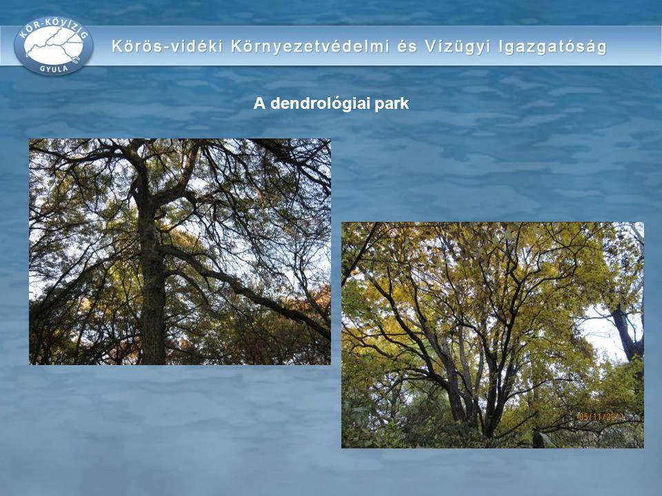 A dendrológiai park