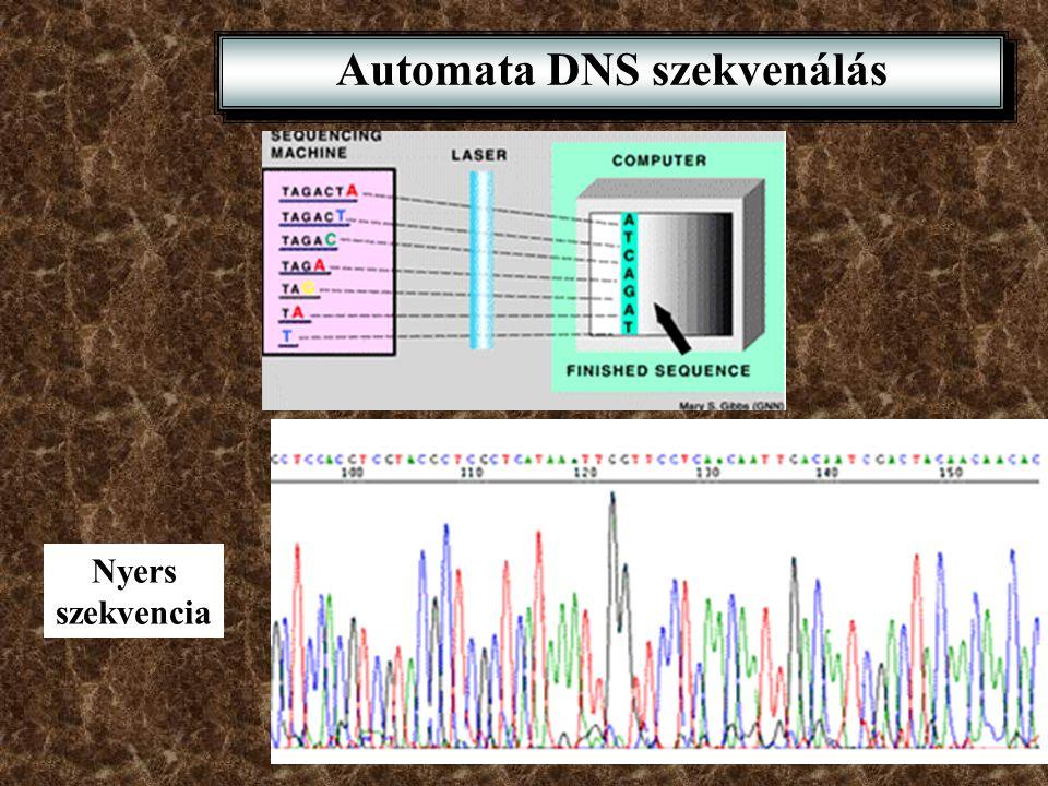 1992-es adatok a DNS szekvenálásról: 1$/bp, 100,000 bp/év Humán genom 3x10 9 bp: 30,000 év, 3 miliárd dollár ? Módszertani áttörések •Automata DNS sze