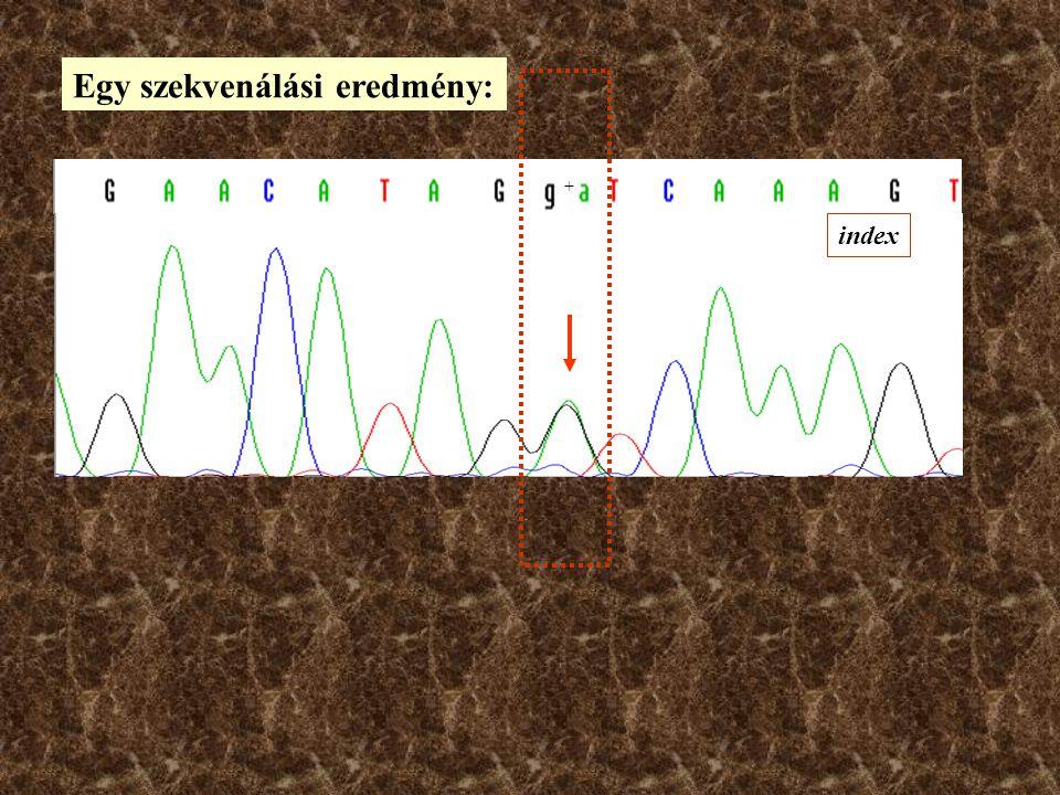 Az automata DNS szekvenálás elve 'Színes szekvenálás` A dideoxi lánc termináláson alapul... 3' CAAGTCACCTTG CAAG AddA Termináló helyek Szekvenáló reak