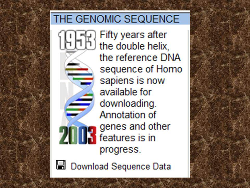 A teljes genom 2 x 3x10 9 bp PCR 10 2 -10 3 bp PCR termék (2 x ) dsDNS fragmentum PCR: Egy kiválasztott DNS szakasz sokszorosítása