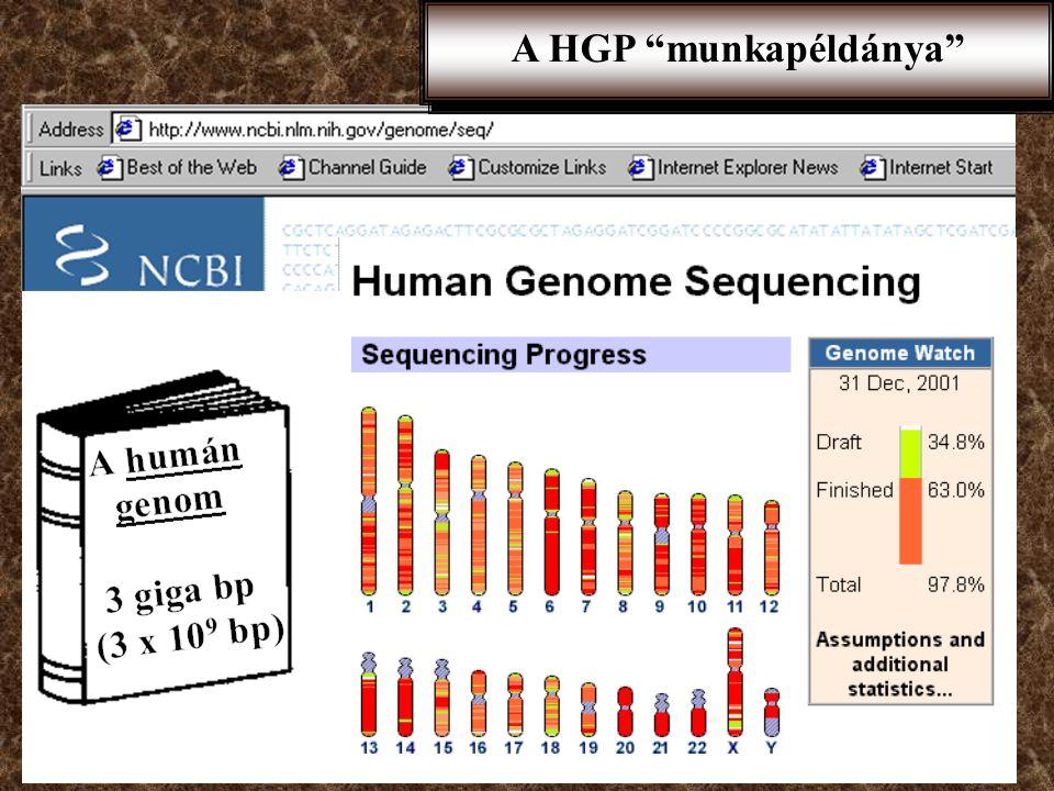 A humán genom projekt Mol. biol. módszerek 1. Dr. Sasvári Mária