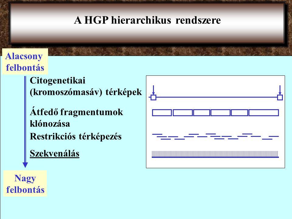 2001 febr 16 Nature: HGP National Human Genome Research Institute NIH, USA) US Department of Energy Wellcome Trust (Anglia) Japán, Franciaország, Németország, Kina kb.