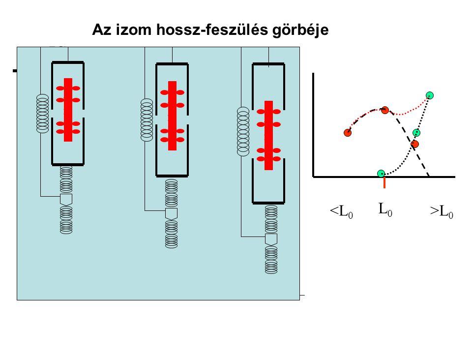 A maximális izometriás erő nagyságát befolyásoló tényezők •I•Izomhossz (erő- hossz összefüggés) •I•Izületi szög (nyomaték – izületi szög összefüggés)