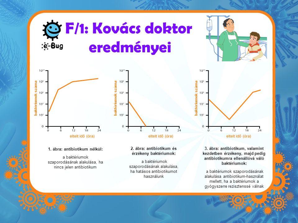 F/1: Kovács doktor eredményei eltelt idő (óra) baktériumok száma eltelt idő (óra) baktériumok száma 1. ábra: antibiotikum nélkül: a baktériumok szapor