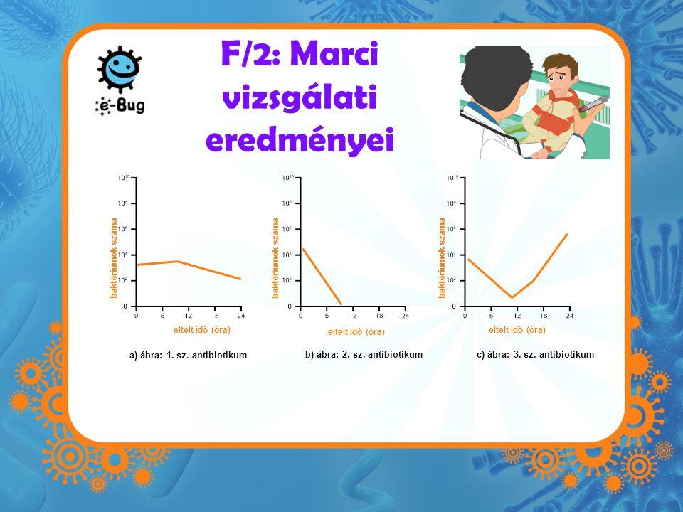 F/2: Marci vizsgálati eredményei a) ábra: 1. sz. antibiotikum b) ábra: 2. sz. antibiotikum c) ábra: 3. sz. antibiotikum eltelt idő (óra) baktériumok s