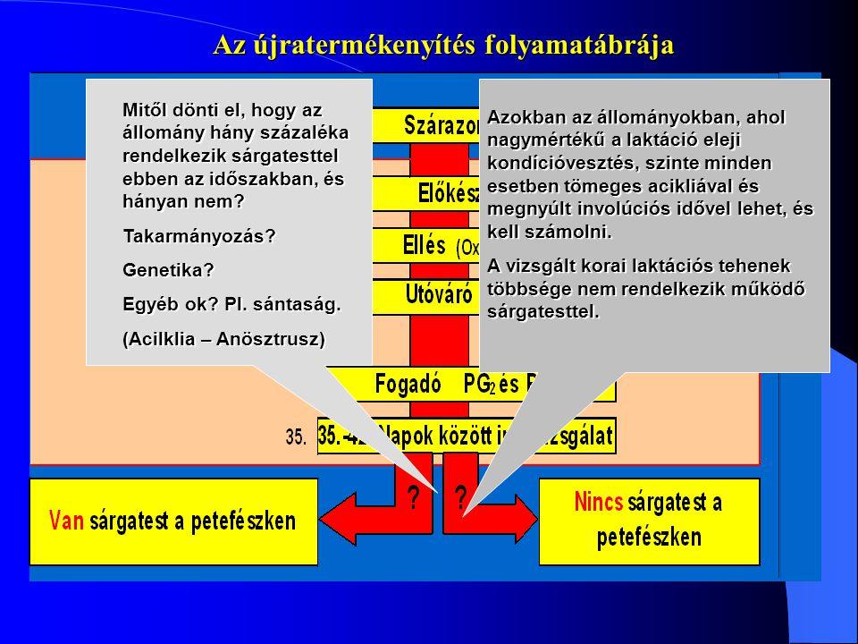 Információ: Dr Csáki Tamás Mobil: 06/30/3694035 Tel/Fax: 22/430-518 Email: drcsaki@mail.alba.hu 60-75% Az újravemhesítés stratégiája