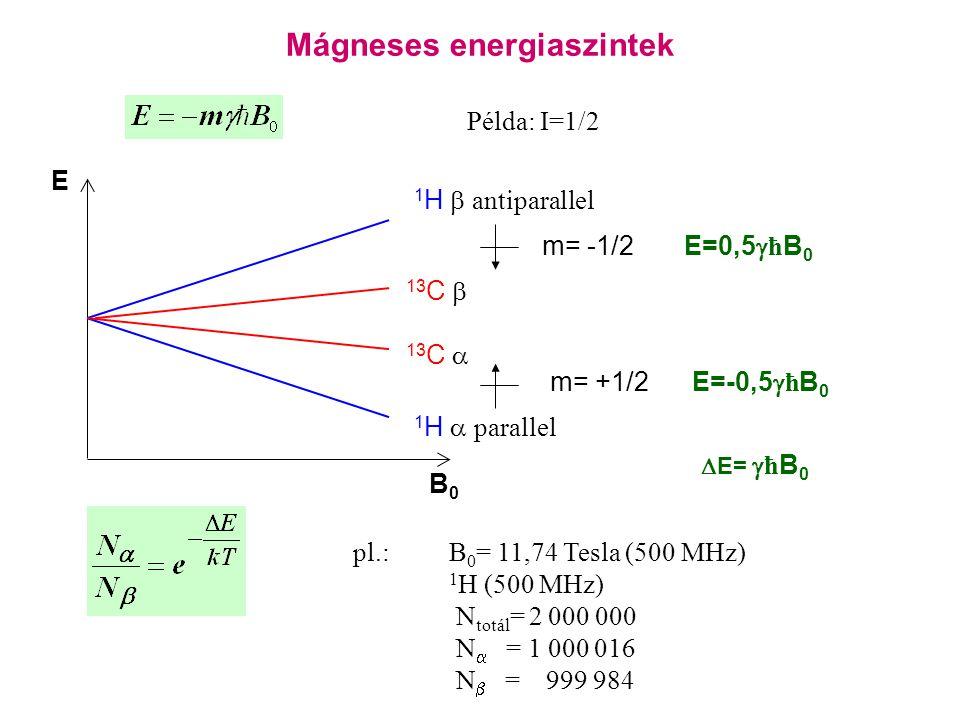 Mágneses energiaszintek E m= -1/2 E=0,5  ħ B 0 B0B0 13 C  13 C  Példa: I=1/2 pl.:B 0 = 11,74 Tesla (500 MHz) 1 H (500 MHz) N totál = 2 000 000 N  = 1 000 016 N  = 999 984 1 H  antiparallel 1 H  parallel m= +1/2 E=-0,5  ħ B 0  E=  ħ B 0