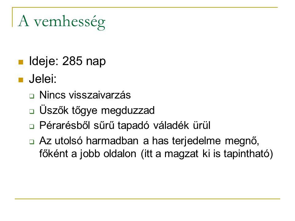 A vemhesség  Ideje: 285 nap  Jelei:  Nincs visszaivarzás  Üszők tőgye megduzzad  Pérarésből sűrű tapadó váladék ürül  Az utolsó harmadban a has