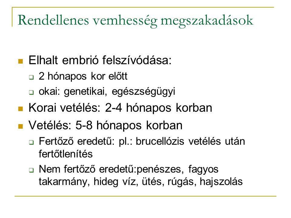 Rendellenes vemhesség megszakadások  Elhalt embrió felszívódása:  2 hónapos kor előtt  okai: genetikai, egészségügyi  Korai vetélés: 2-4 hónapos k