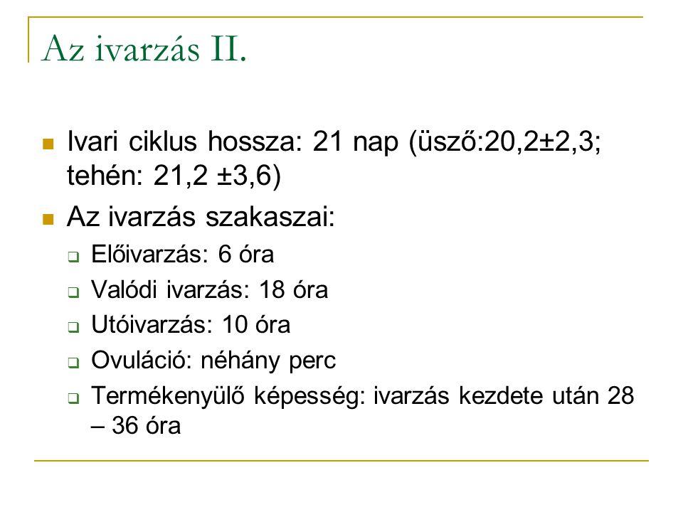 Az ivarzás II.  Ivari ciklus hossza: 21 nap (üsző:20,2±2,3; tehén: 21,2 ±3,6)  Az ivarzás szakaszai:  Előivarzás: 6 óra  Valódi ivarzás: 18 óra 