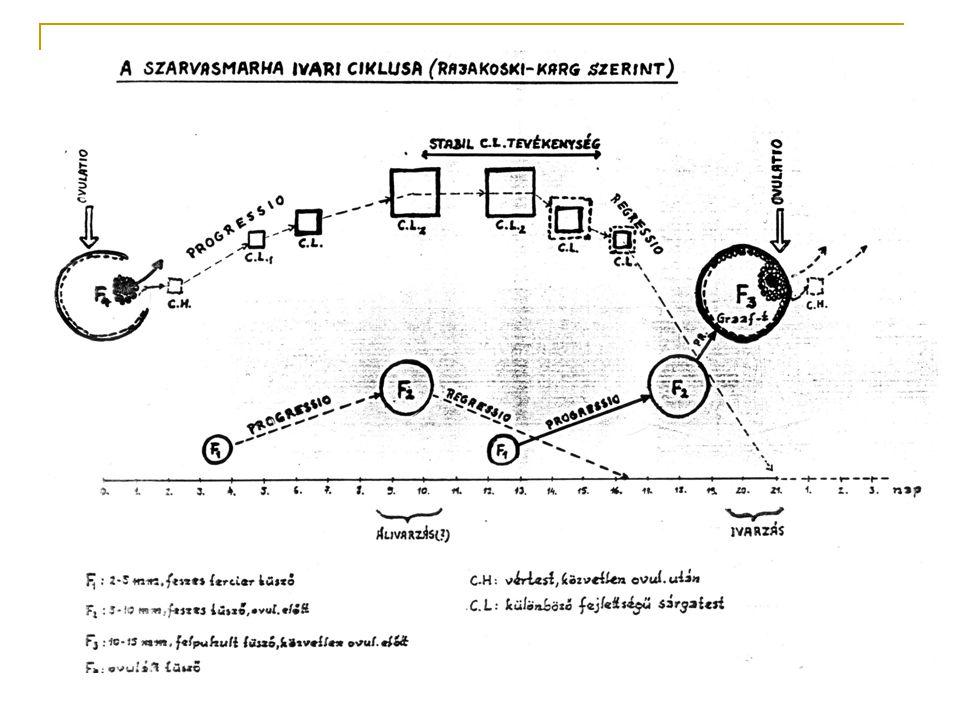 A vemhesség  Ideje: 285 nap  Jelei:  Nincs visszaivarzás  Üszők tőgye megduzzad  Pérarésből sűrű tapadó váladék ürül  Az utolsó harmadban a has terjedelme megnő, főként a jobb oldalon (itt a magzat ki is tapintható)