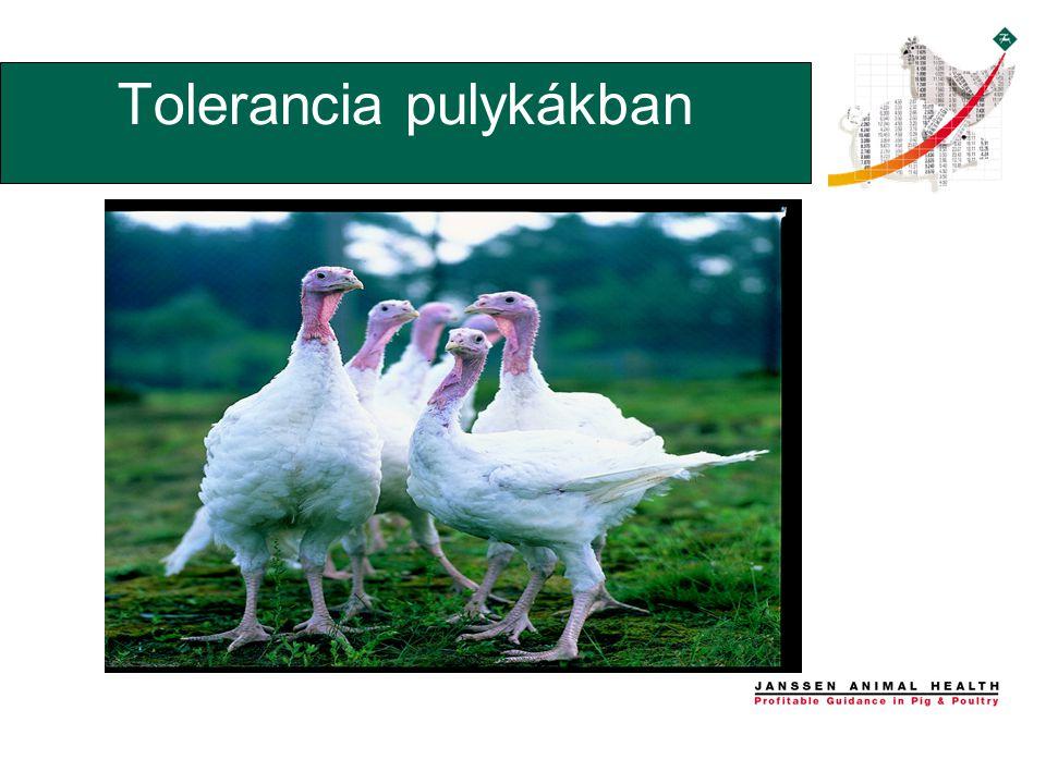 Tolerancia pulykákban