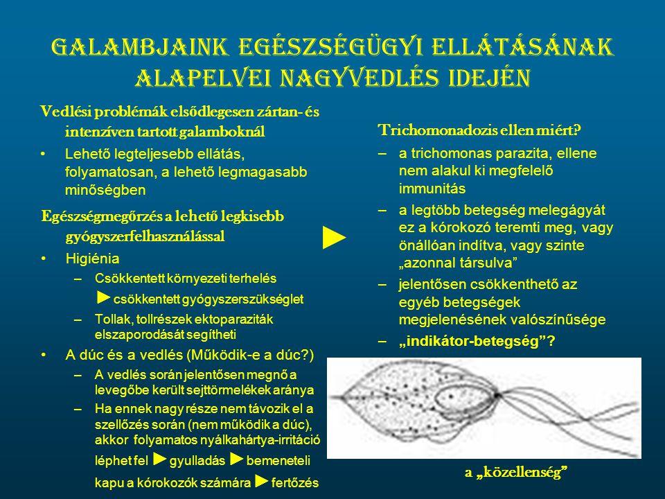 Galambjaink egészségügyi ellátásának alapelvei nagyvedlés idején Vedlési problémák els ő dlegesen zártan- és intenzíven tartott galamboknál •Lehető legteljesebb ellátás, folyamatosan, a lehető legmagasabb minőségben Trichomonadozis ellen miért.