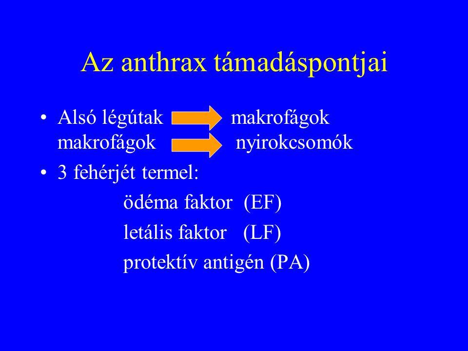 """Az anthrax fajtái •Bőr-antrax: ritka a fatalis kimenetel, fertőzött háziállatoktól, •Inhalációs (tüdő)-antrax: """"gyapjúválogató betegség,vágóhídi és textilmunkások."""