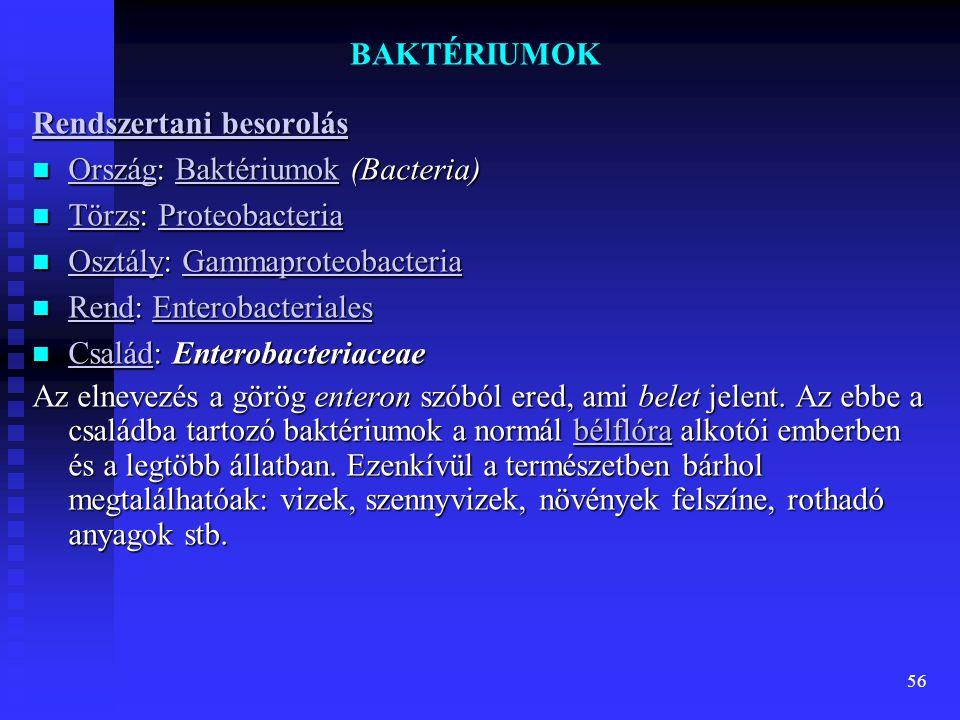 56 BAKTÉRIUMOK Rendszertani besorolás Rendszertani besorolás  Ország: Baktériumok (Bacteria) OrszágBaktériumok OrszágBaktériumok  Törzs: Proteobacte