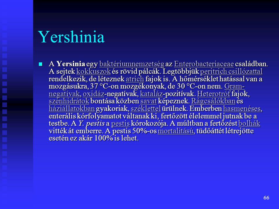 66 Yershinia  A Yersinia egy baktériumnemzetség az Enterobacteriaceae családban. A sejtek kokkuszok és rövid pálcák. Legtöbbjük peritrich csillózatta