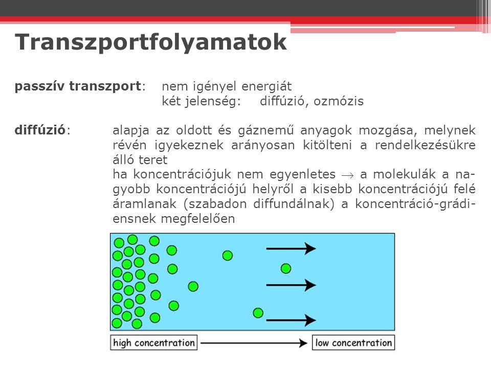 Transzportfolyamatok passzív transzport:nem igényel energiát két jelenség:diffúzió, ozmózis diffúzió:alapja az oldott és gáznemű anyagok mozgása, mely