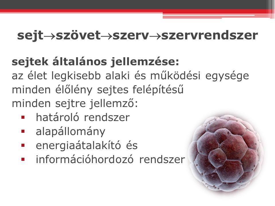 sejtszövetszervszervrendszer sejtek általános jellemzése: az élet legkisebb alaki és működési egysége minden élőlény sejtes felépítésű minden sejtr