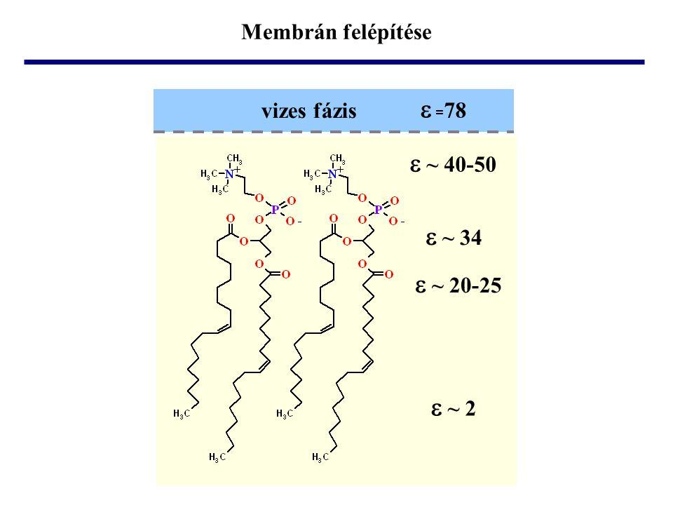 • foszfolipidek • glikolipidek • szfingomielin • koleszterin Legfontosabb membránalkotó molekulák: