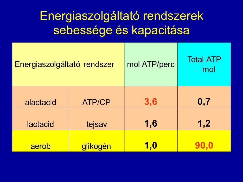 Energiaszolgáltató rendszerek sebessége és kapacitása Energiaszolgáltató rendszermol ATP/perc Total ATP mol alactacidATP/CP 3,60,7 lactacidtejsav 1,61