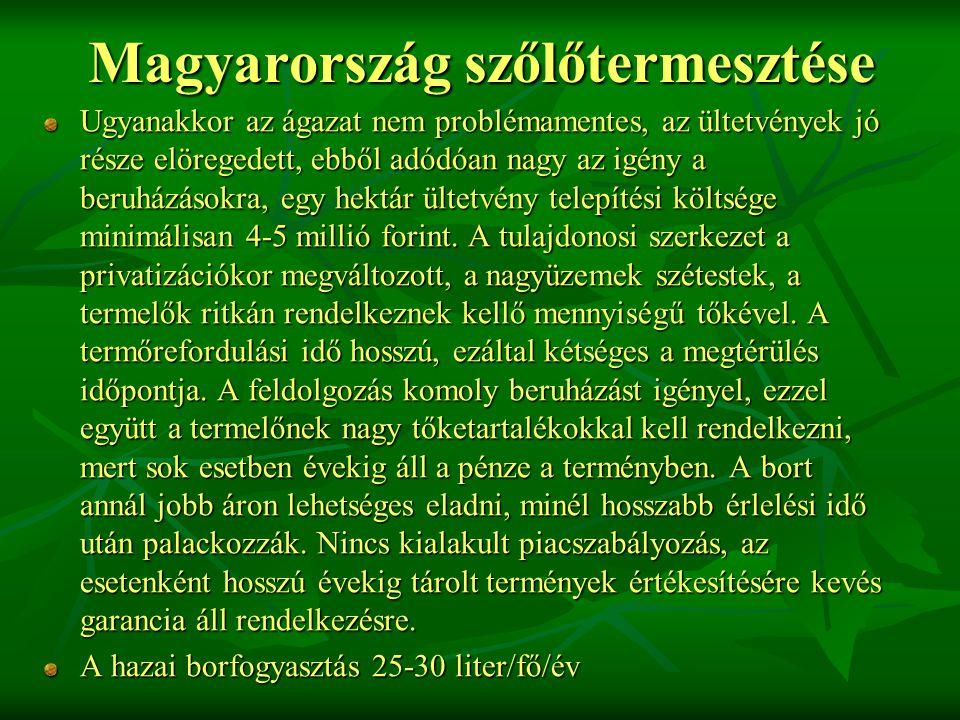 Magyarország szőlőtermesztése Ugyanakkor az ágazat nem problémamentes, az ültetvények jó része elöregedett, ebből adódóan nagy az igény a beruházásokra, egy hektár ültetvény telepítési költsége minimálisan 4-5 millió forint.
