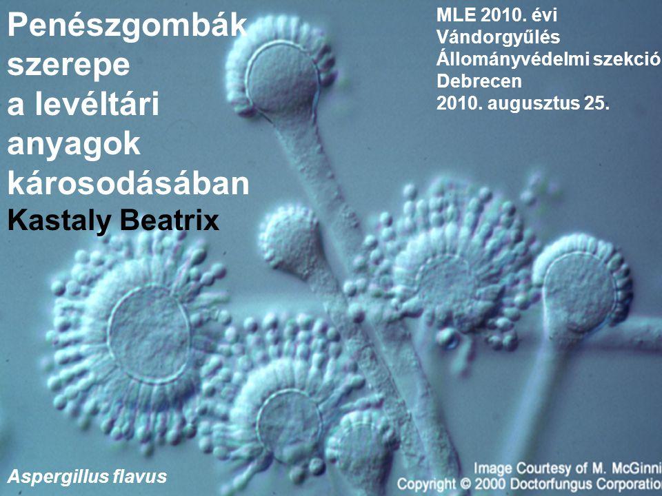 MLE 2010. évi Vándorgyűlés Állományvédelmi szekció Debrecen 2010. augusztus 25. Penészgombák szerepe a levéltári anyagok károsodásában Kastaly Beatrix