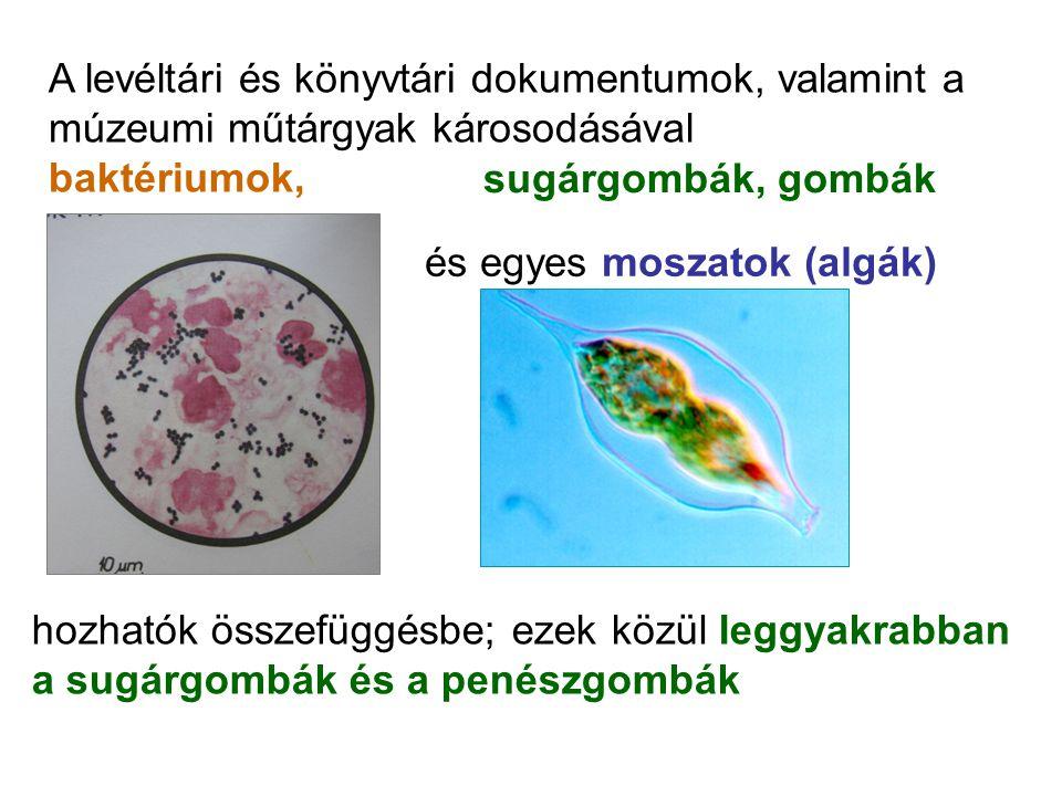 A levéltári és könyvtári dokumentumok, valamint a múzeumi műtárgyak károsodásával baktériumok, sugárgombák, gombák és egyes moszatok (algák) hozhatók